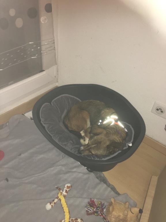 Ginka - femelle - fourrière de Târgu Frumos - sera en famille d'accueil dans le 67 en mai A22b5310