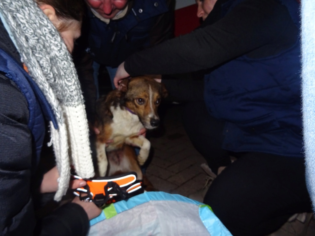 Ginka - femelle - fourrière de Târgu Frumos - sera en famille d'accueil dans le 67 en mai A4b0aa10
