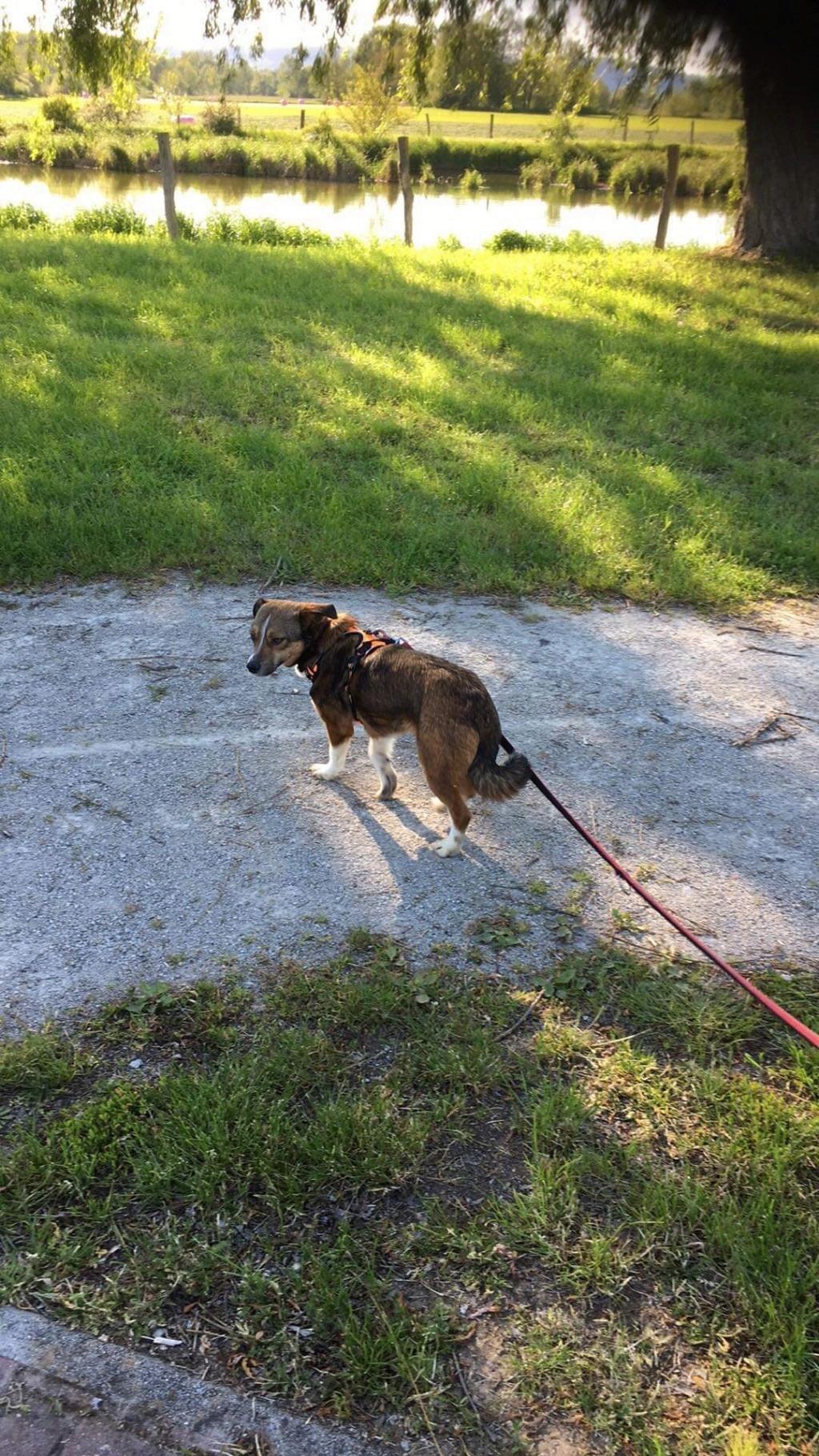 Ginka - femelle - fourrière de Târgu Frumos - sera en famille d'accueil dans le 67 en mai - Page 2 A55bb210