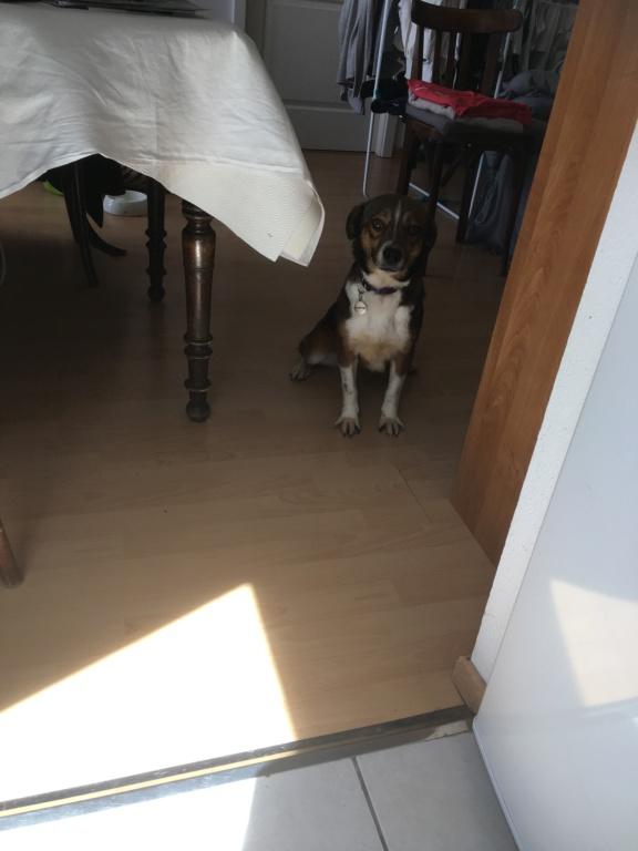 Ginka - femelle - fourrière de Târgu Frumos - sera en famille d'accueil dans le 67 en mai - Page 2 C7be0310
