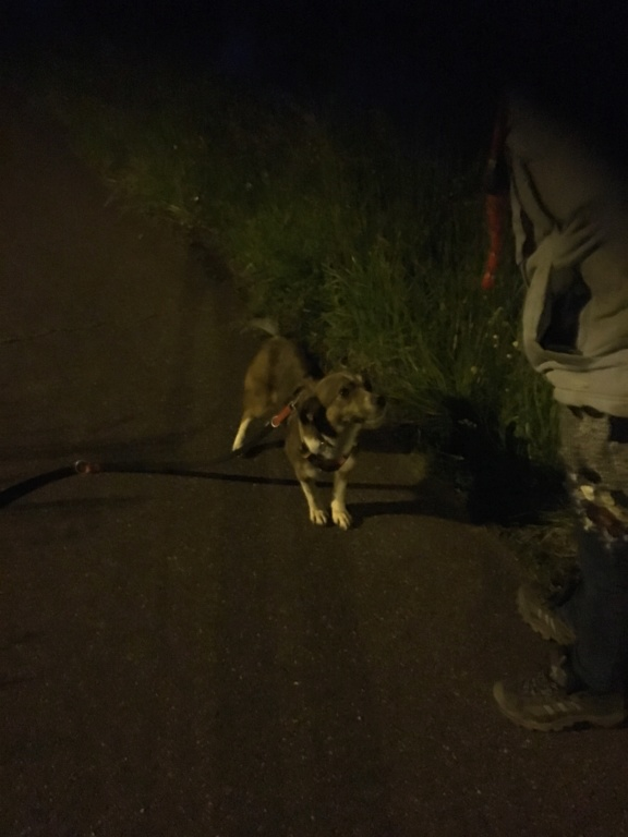 Ginka - femelle - fourrière de Târgu Frumos - sera en famille d'accueil dans le 67 en mai - Page 2 E51f4010