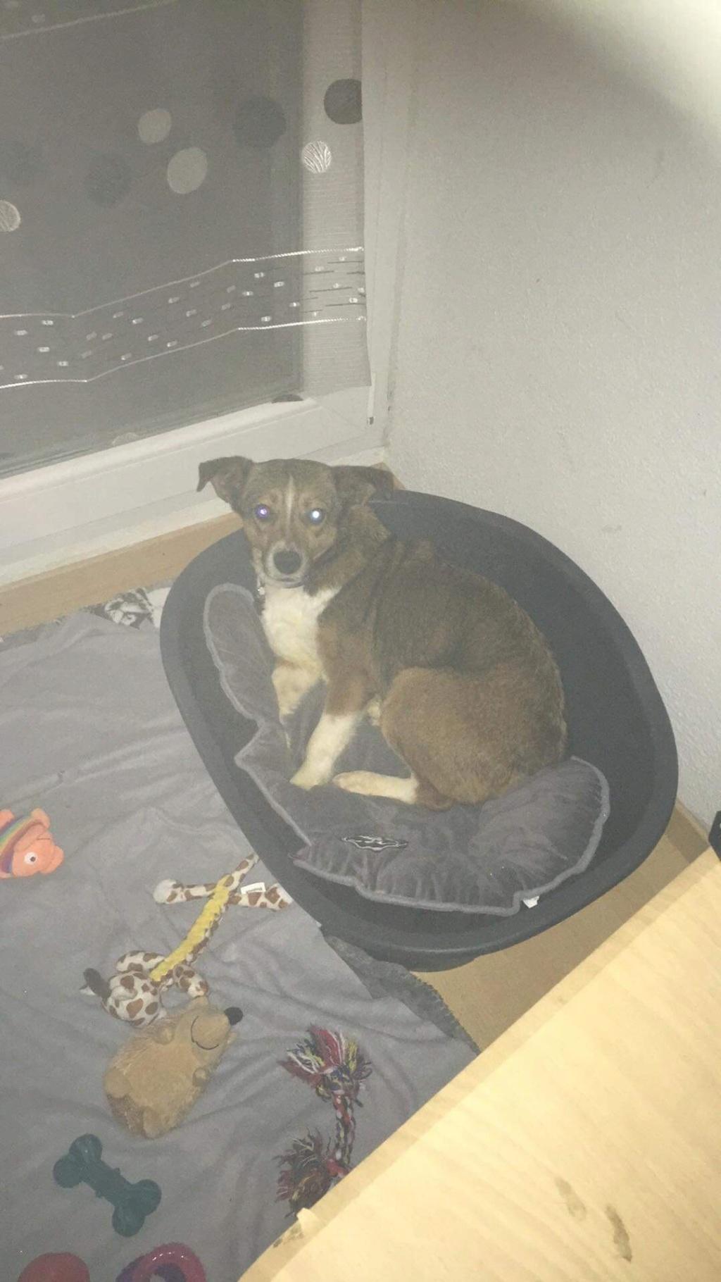 Ginka - femelle - fourrière de Târgu Frumos - sera en famille d'accueil dans le 67 en mai - Page 2 F6624710