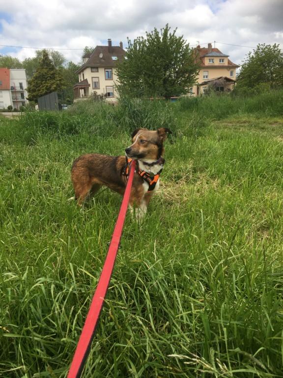 Ginka - femelle - fourrière de Târgu Frumos - sera en famille d'accueil dans le 67 en mai Fd1a8c10