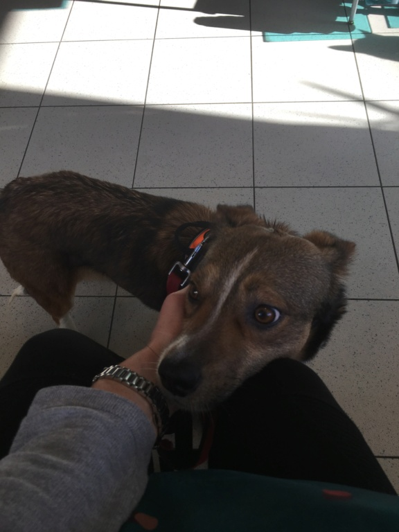 Ginka - femelle - fourrière de Târgu Frumos - sera en famille d'accueil dans le 67 en mai - Page 2 Fd740e10