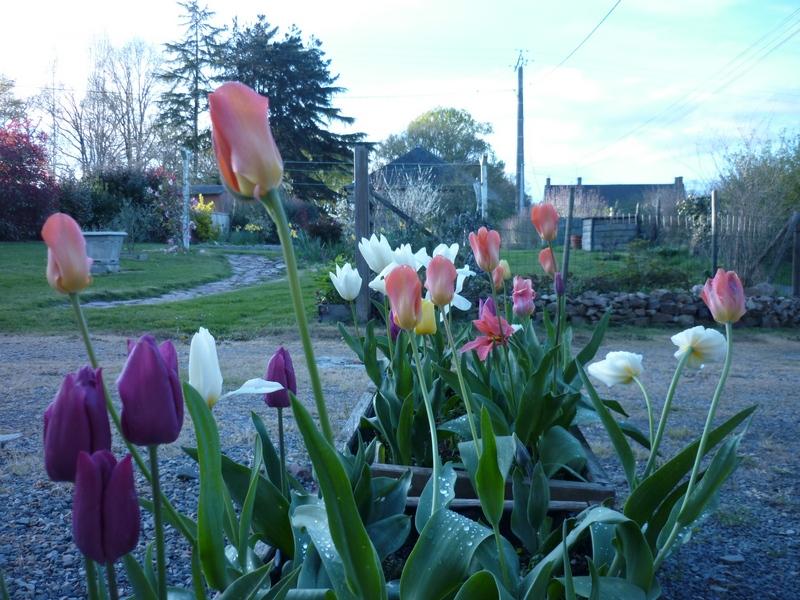 Vos plantes, fleurs, jardin !  - Page 24 4111