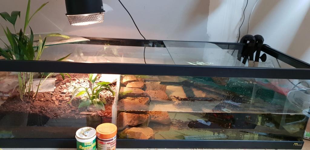 Kinosternon leucostomum faible 20190210
