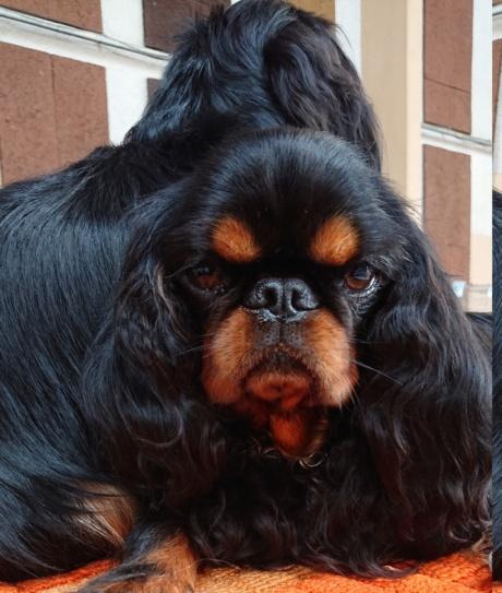 mes chiens Opale110