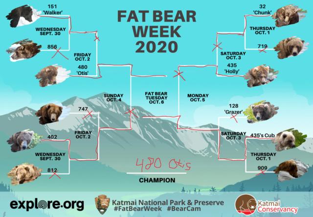 /ʕ •ᴥ•ʔ/ - Random Bear Facts! - ⧵ʕ•ᴥ• ʔ⧵ - Page 2 Fatbea11