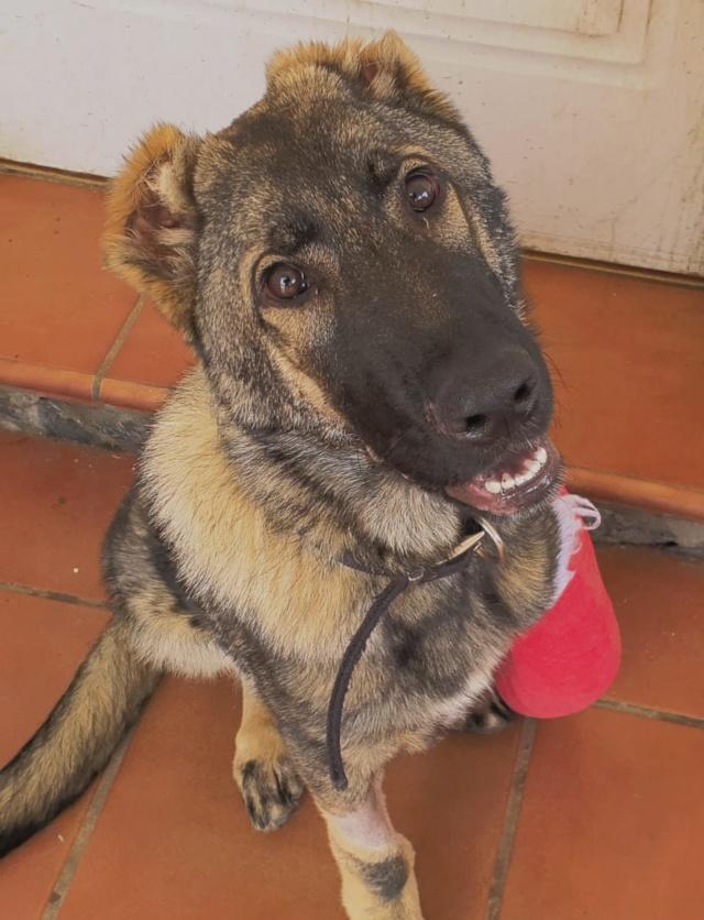 CA-  Togo - (gedeeltelijke adoptie) 045b4410
