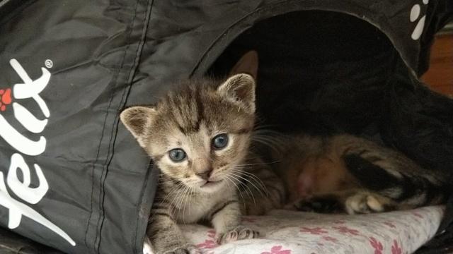 VF Mams met kitten 10698410