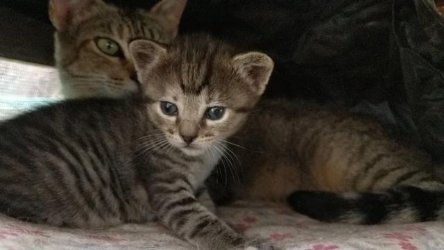 VF Mams met kitten 10701210