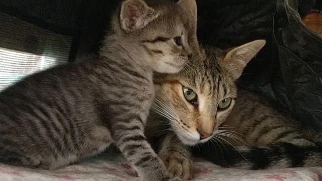 VF Mams met kitten 10752410
