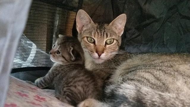 VF Mams met kitten 10754510