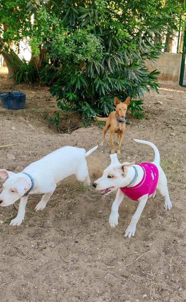 2 pups over het hek gegooid  11879111