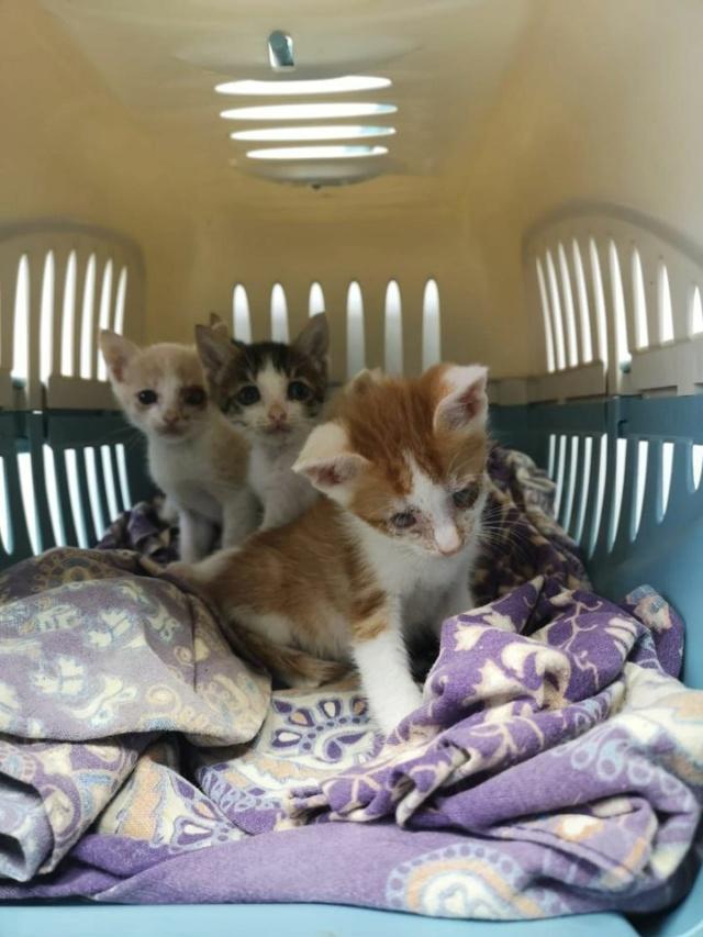 5 kittens 12084010