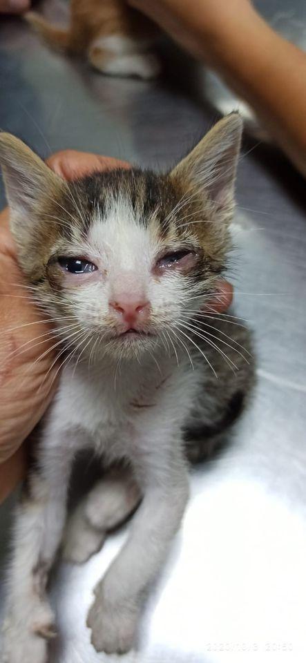 5 kittens 12084110
