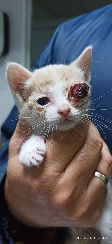 5 kittens 12094911