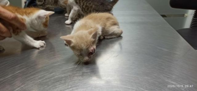 5 kittens 12095511