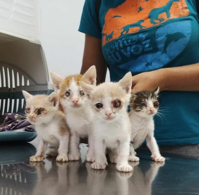 5 kittens 12095512