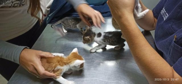 5 kittens 12096310