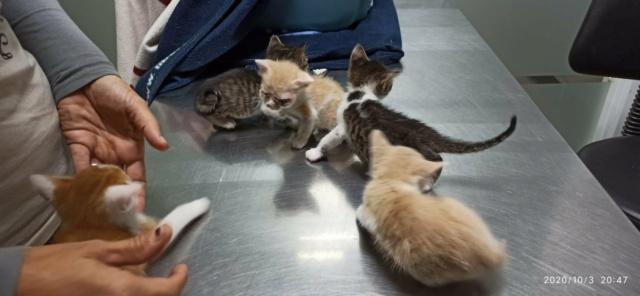 5 kittens 12096510