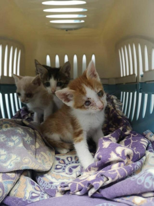 5 kittens 12096610