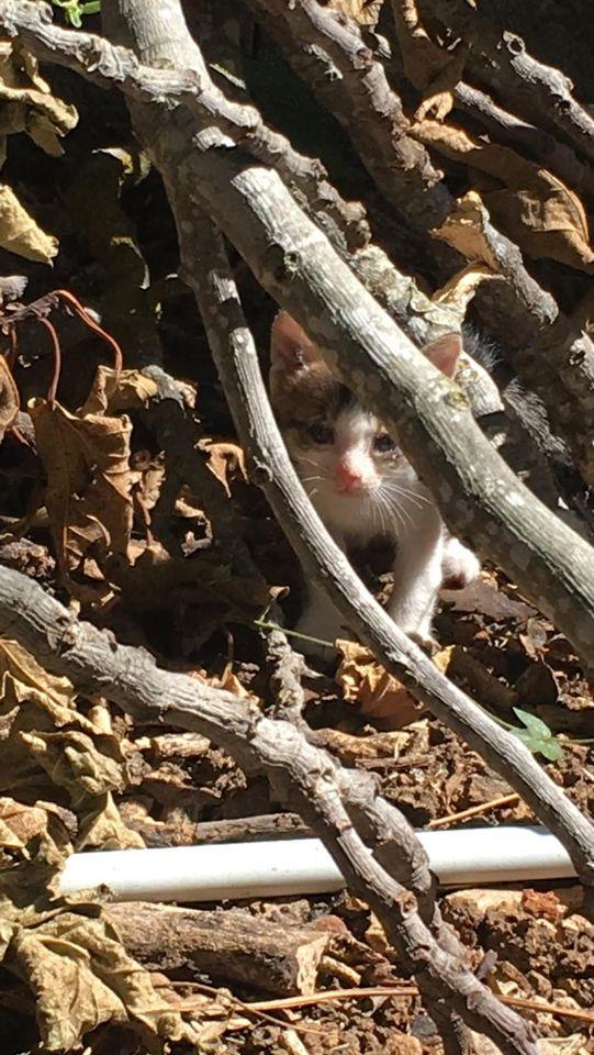 5 kittens 12097010