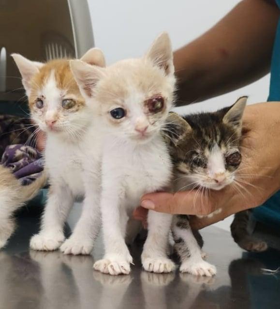 5 kittens 12097011
