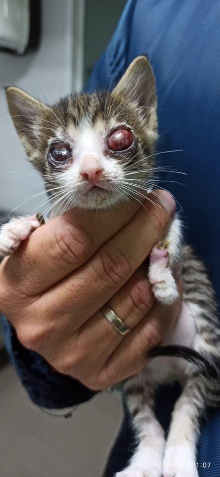 5 kittens 12099711