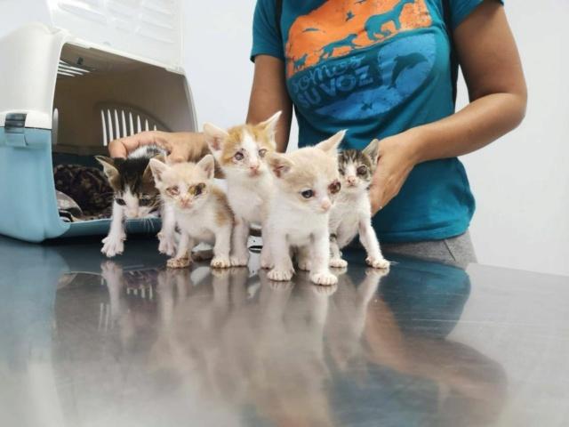 5 kittens 12099810