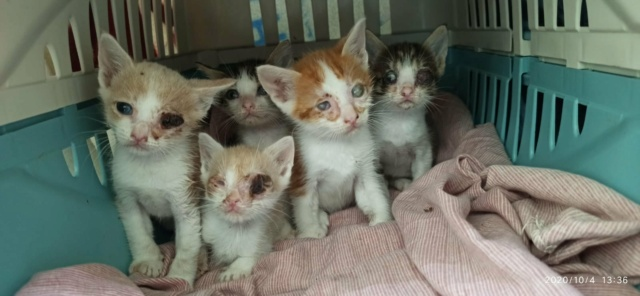 5 kittens 12100010