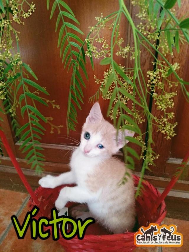 5 kittens 12553610