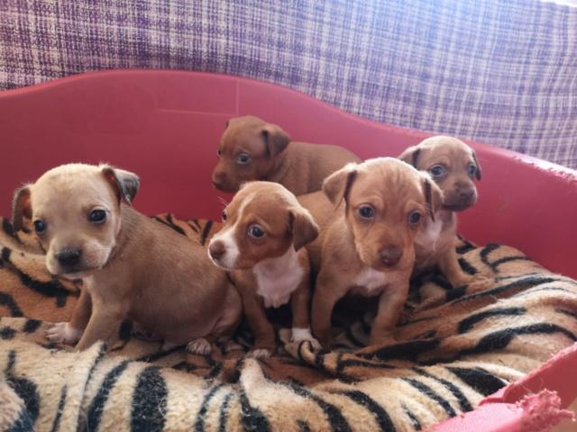 Voer voor de pups van Mijita 13950810