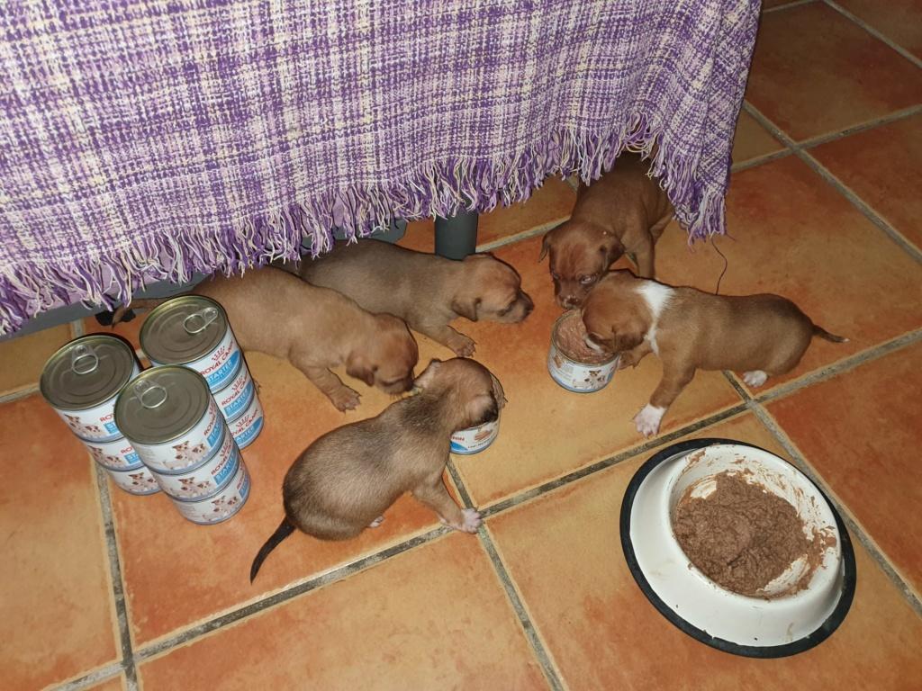 Voer voor de pups van Mijita 218de710