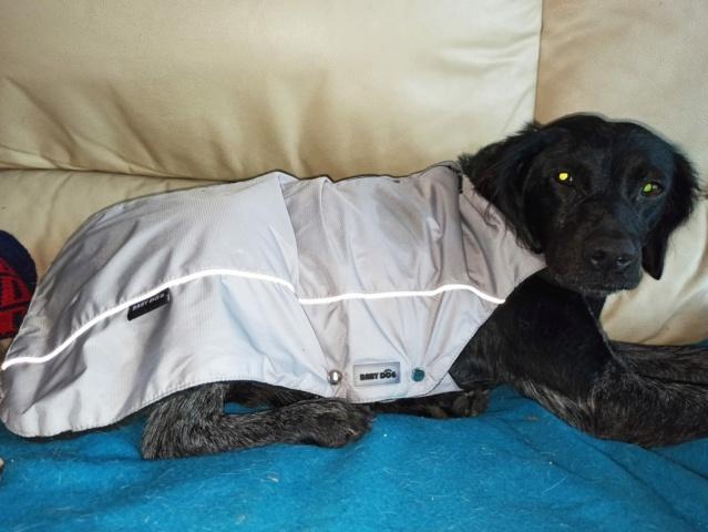 21 Dec - Pallet aangekomen bij Canis y Felis 271d5610