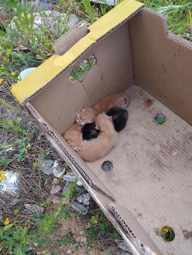 Doos met 4 kittens in een veld achtergelaten 2bcf1610