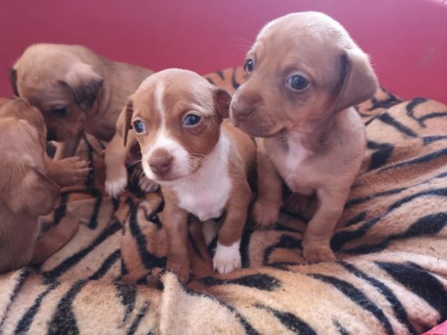 Voer voor de pups van Mijita 2c19af10