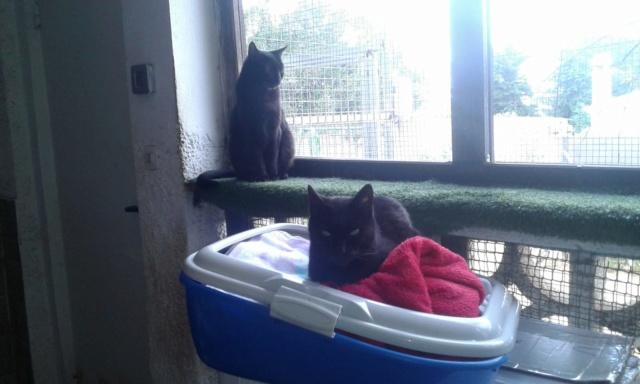 3 pallets voor Canis y Felis zijn aangekomen 3278e610