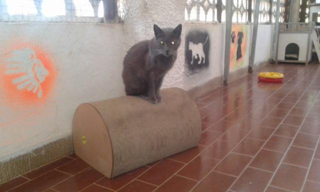3 pallets voor Canis y Felis zijn aangekomen 33496810