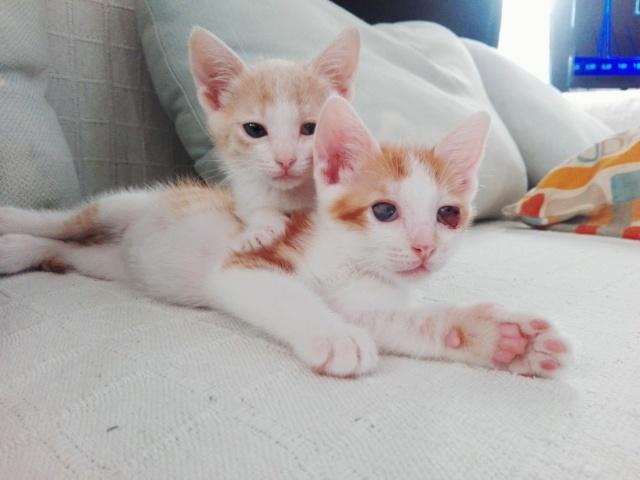5 kittens 34888c10