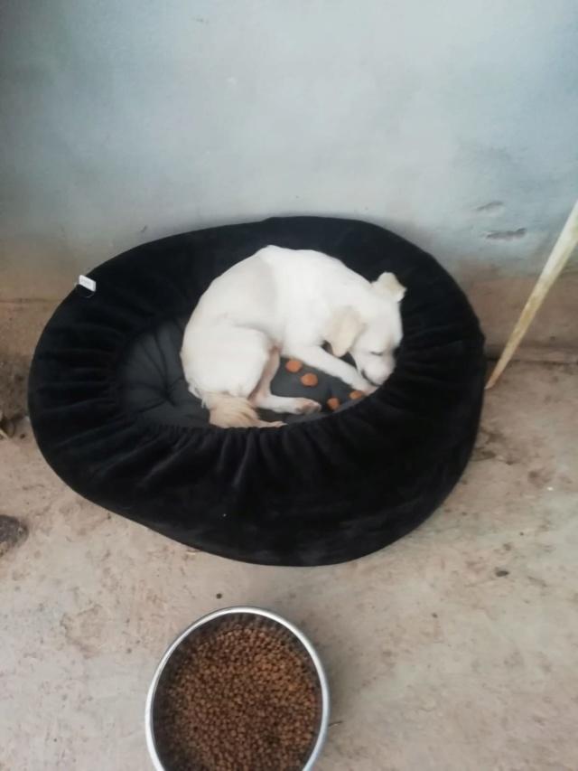 2 pallets voor van Asociacion Refugio libertad animal te Malaga 36390c10