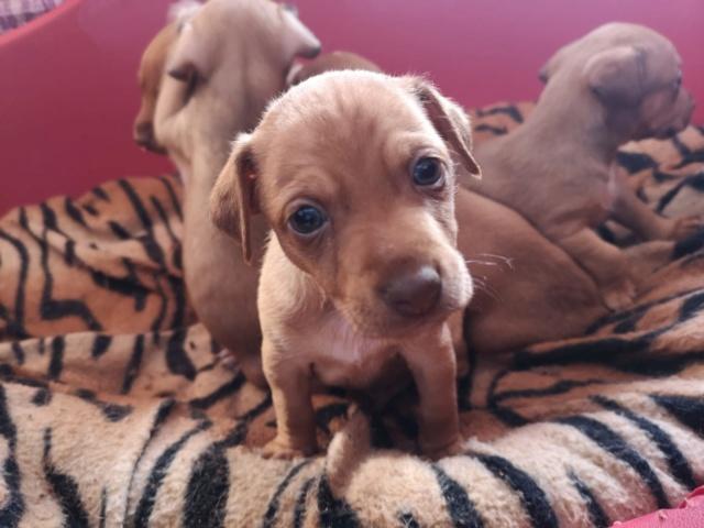 Voer voor de pups van Mijita 39631410