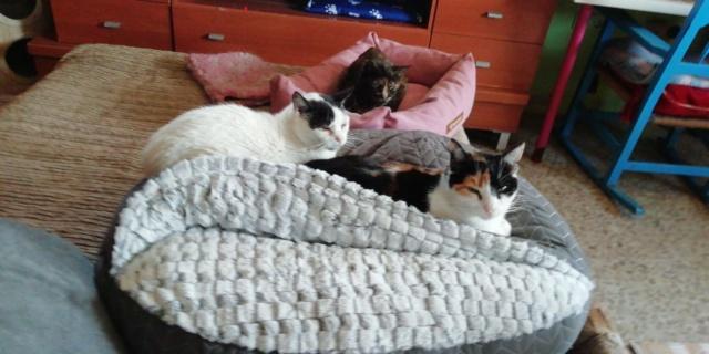 3 pallets voor Canis y Felis zijn aangekomen 42f7d610