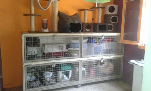 3 pallets voor Canis y Felis zijn aangekomen 4fa7a010
