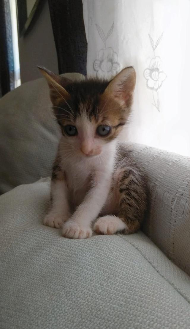 5 kittens 56877a10