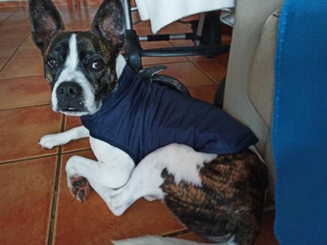 21 Dec - Pallet aangekomen bij Canis y Felis 5ffdba10