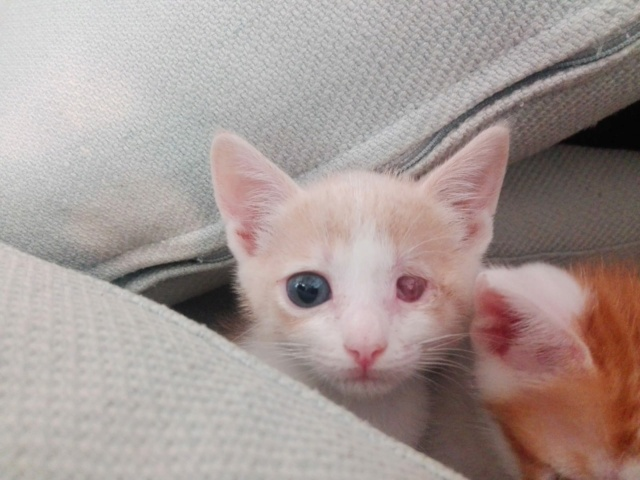 5 kittens 88a8e711