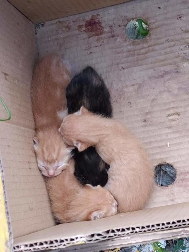 Doos met 4 kittens in een veld achtergelaten 8c0ede10