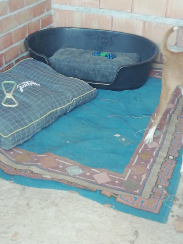 2 pallets voor van Asociacion Refugio libertad animal te Malaga 8c1c0a10
