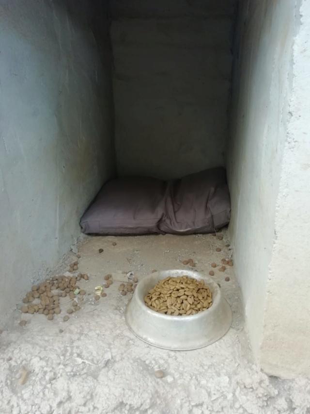 2 pallets voor van Asociacion Refugio libertad animal te Malaga 904ca210